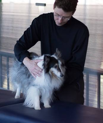 canine massage therapy | hope crossing animal hospital